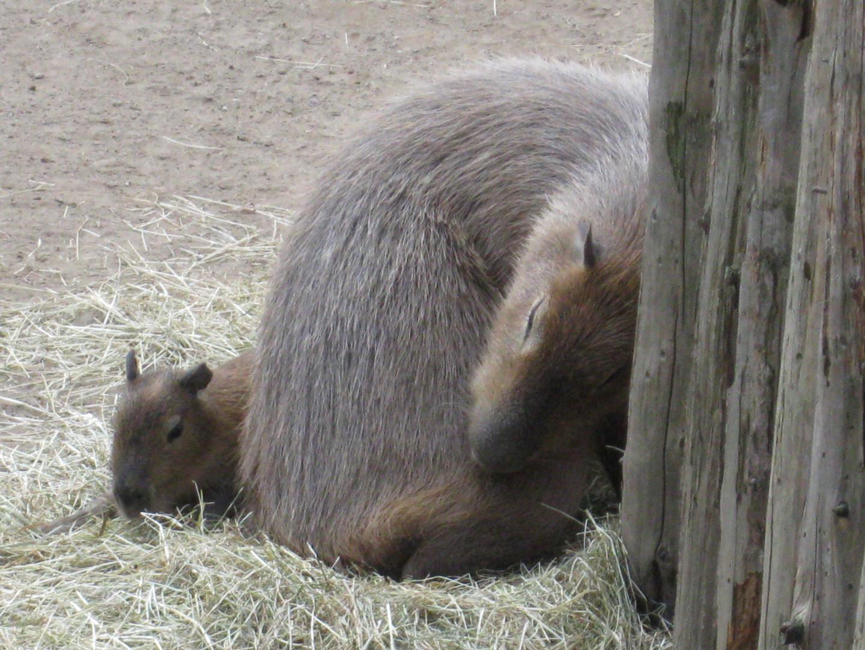 Schweriner Zoo