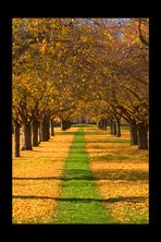 Schwetzinger Herbst