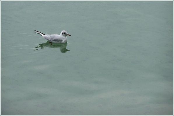 Schwimm, schwimm...