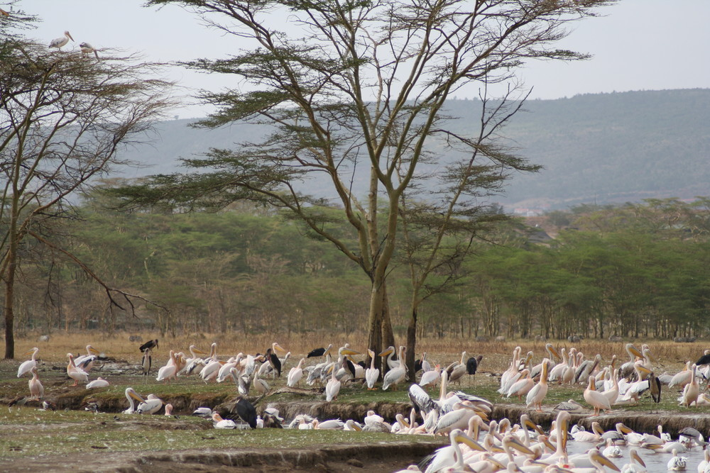 Schwimmbad am Lake Nakuru