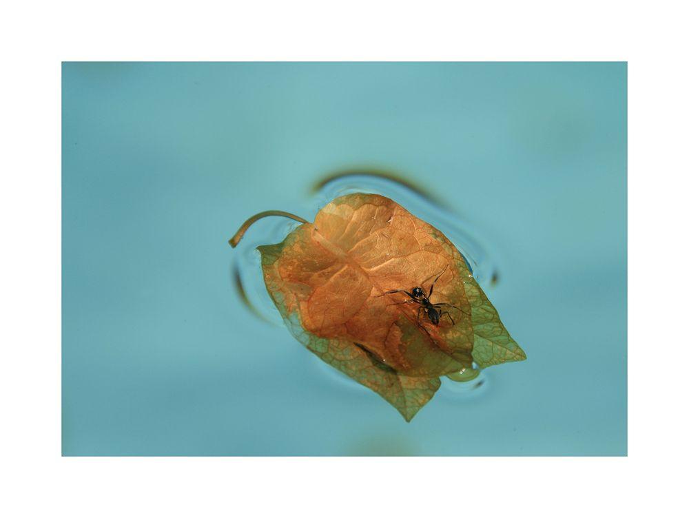 Schwimmen im Pool von Elke Grundhöfer