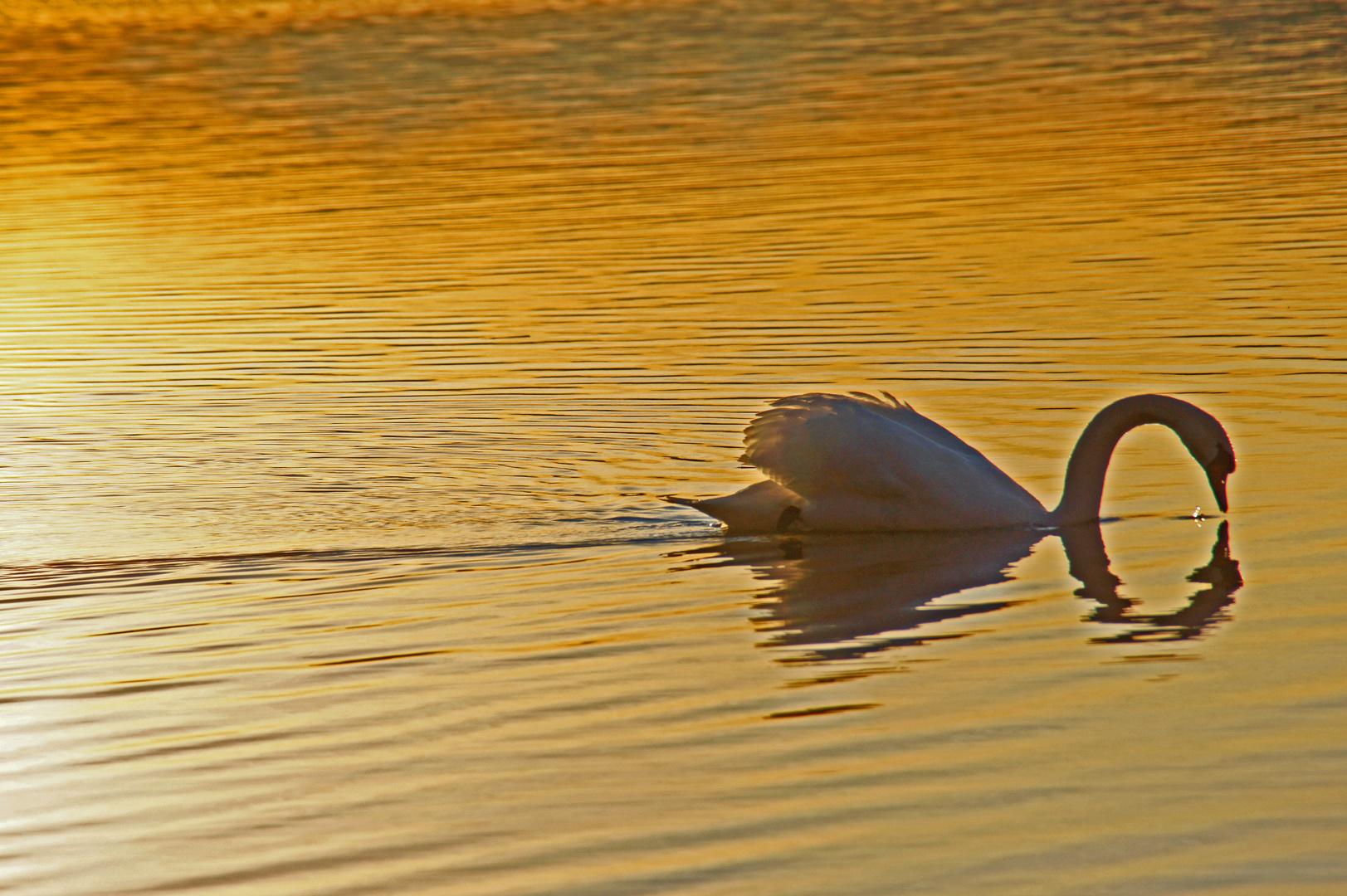 Schwimmen in Gold