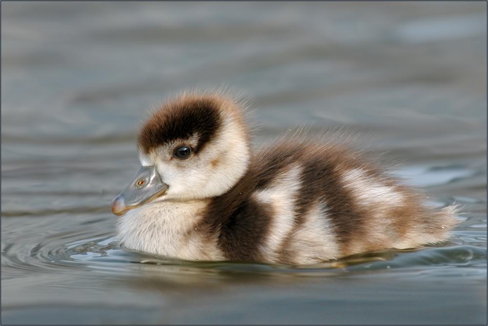 Schwimmen kann ich auch schon!