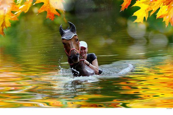 Schwimmen Pferd