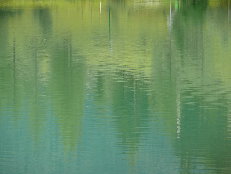 Schwimmende Bäume