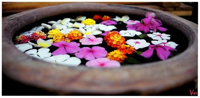 Schwimmende Blüten