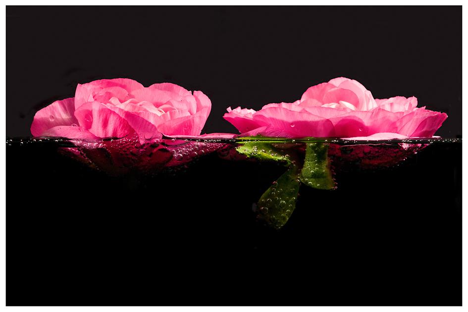 schwimmende Schönheiten