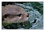 Schwimmender Otter...
