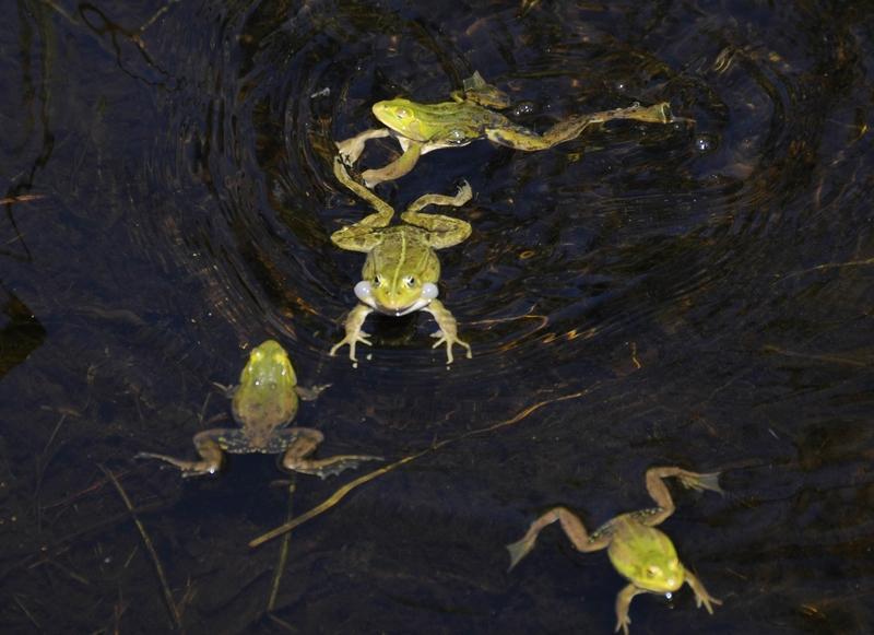 ...Schwimmkurs im Teich....