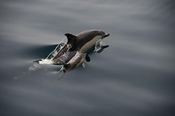 Schwimmunterricht im Atlantik