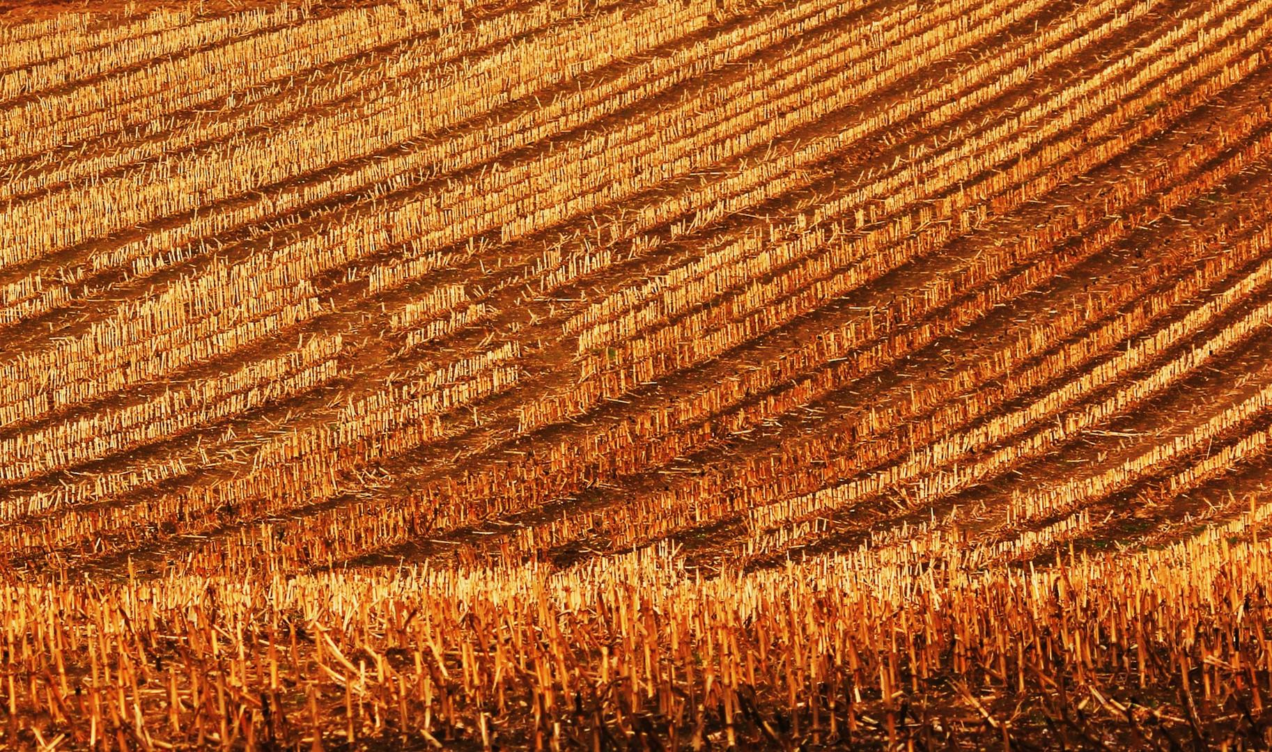 Schwungvolle Landwirtschaft