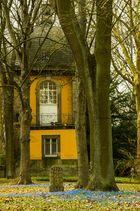 Scilla-Blütenfest I - Lindener Berg/Hannover