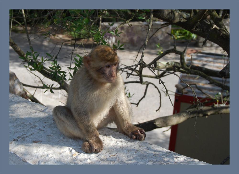 Scimmia bebè