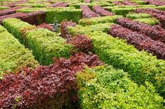 Scone Garden - Murray Star Maze
