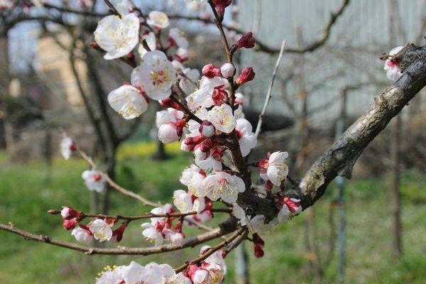 scorci di primavera