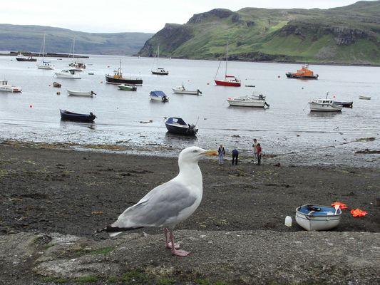 Scozia, il gabbiano e la marea