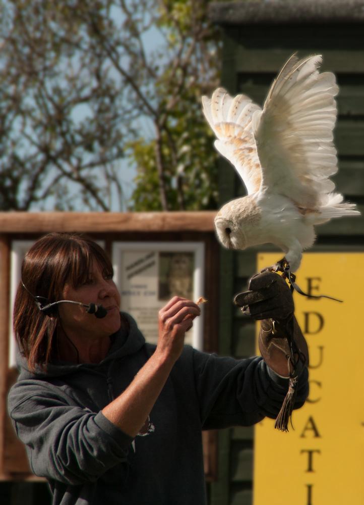 Screech Owl Sanctuary - Feeding the Owl