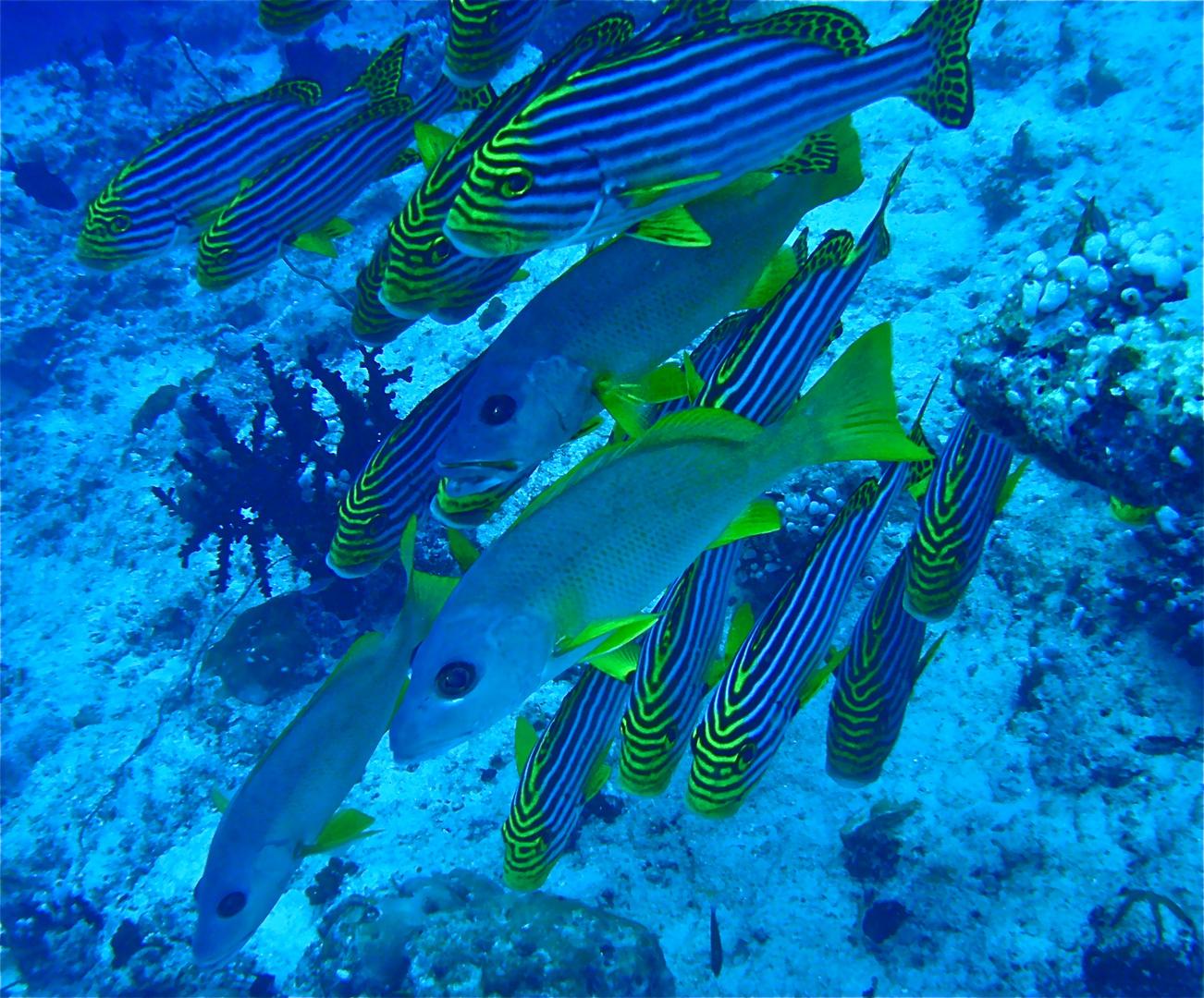 scuba maledives 07
