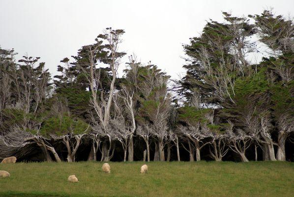 Sculpté par le vent