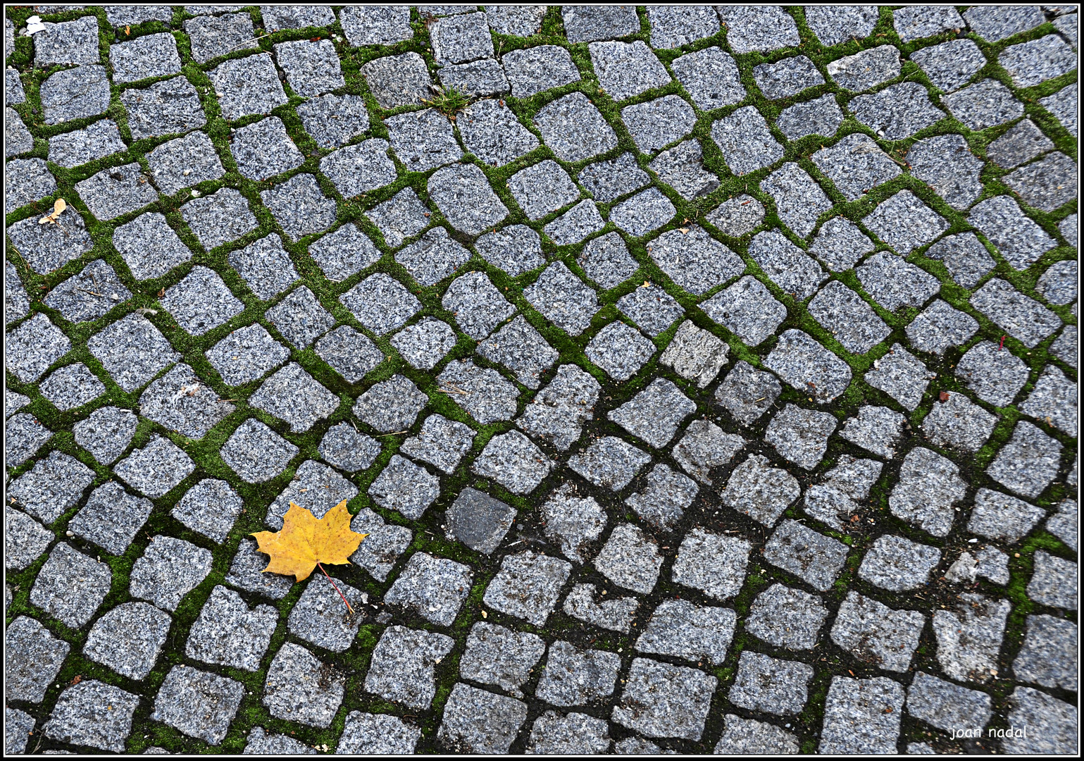 Se aproxima el otoño