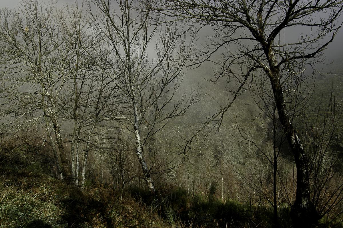 Se despeja la niebla