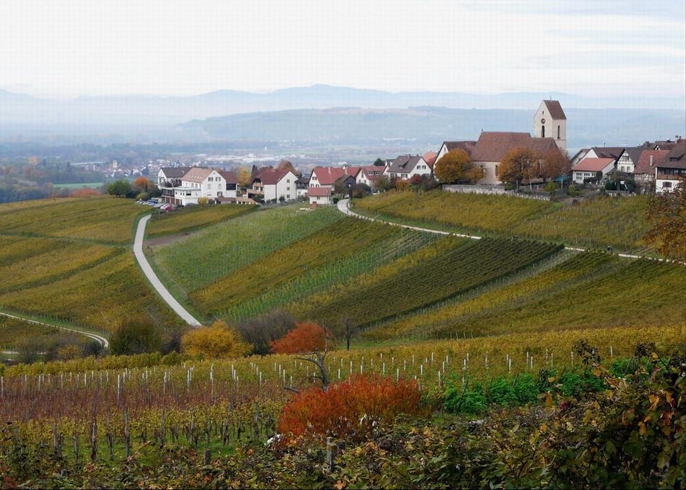 Se ressourcer dans les vignes d'OTLINGEN (D)