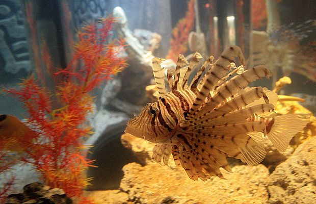 sea life bewohner 4