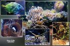 Sea Life - Grußkarte