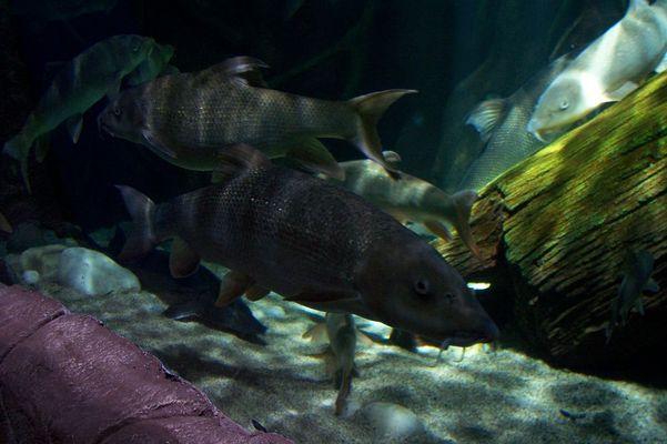 Sea Life Hannover 2