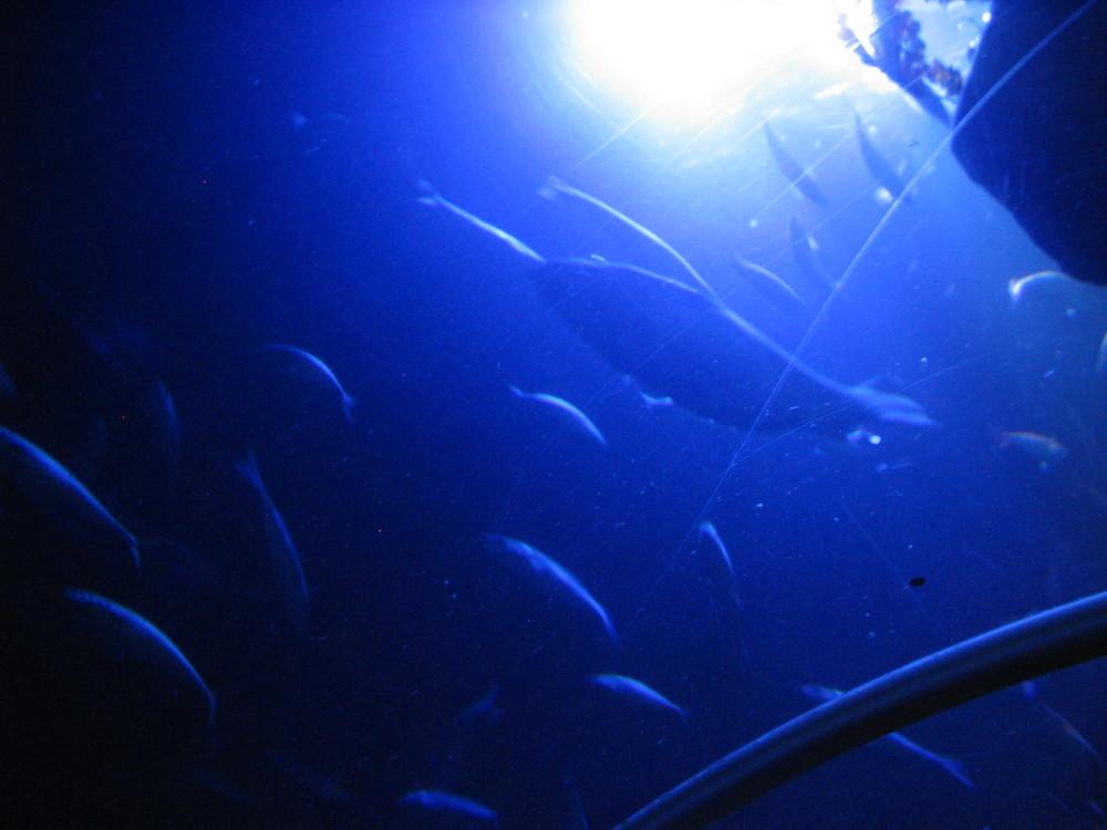 Sea Life Speyer 3