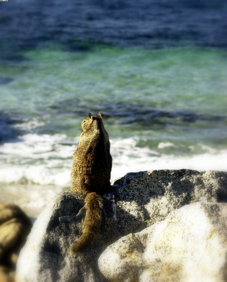 """Sea Squirrel""__""Meerhoernchen"""