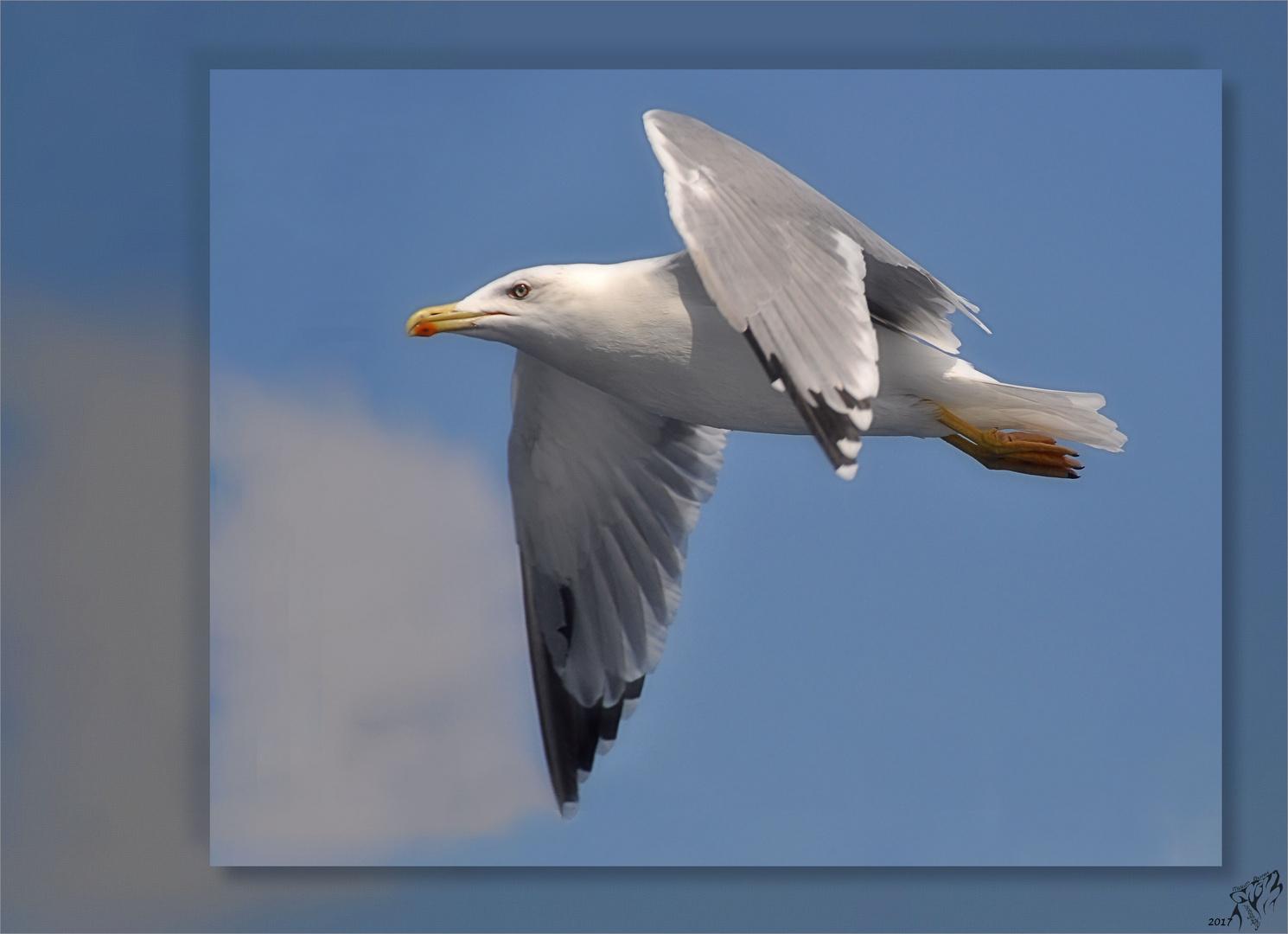 Seagull acros the horizon ..