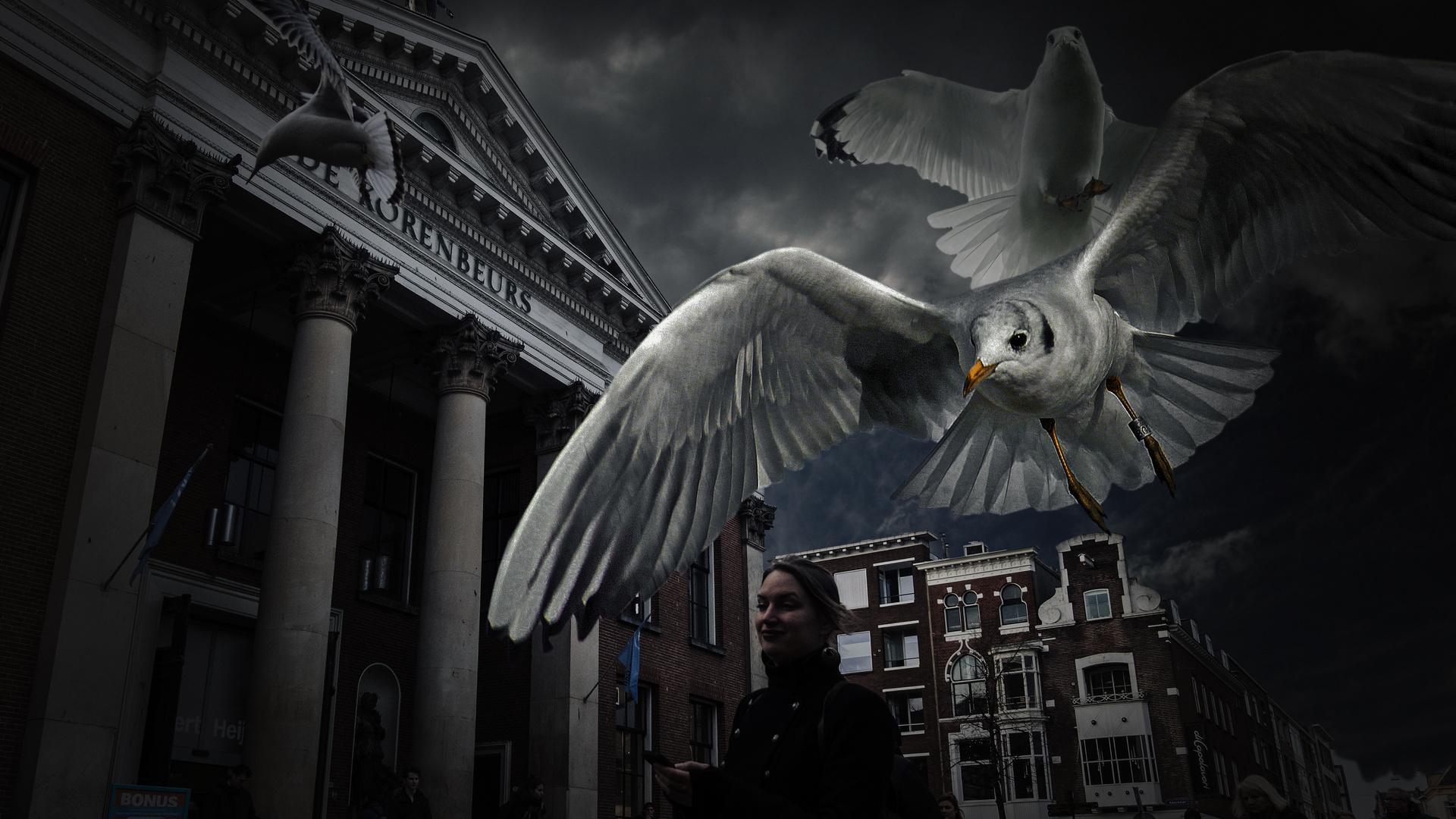 Seagull attacks