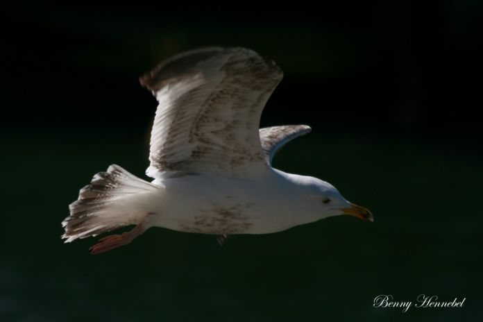 Seagull Flight...