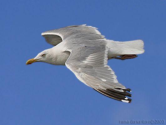 Seagull#1