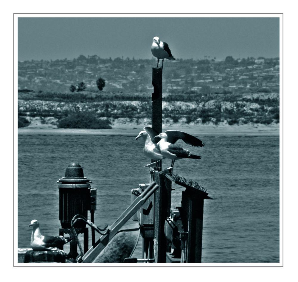 seagulls at morro bay