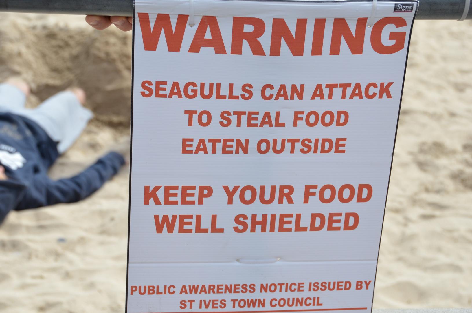 Seagulls haben schon attackiert