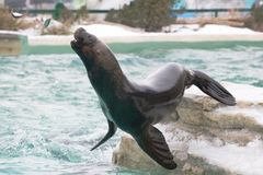Seal Feeding #2