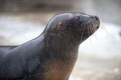 Seal Feeding #5