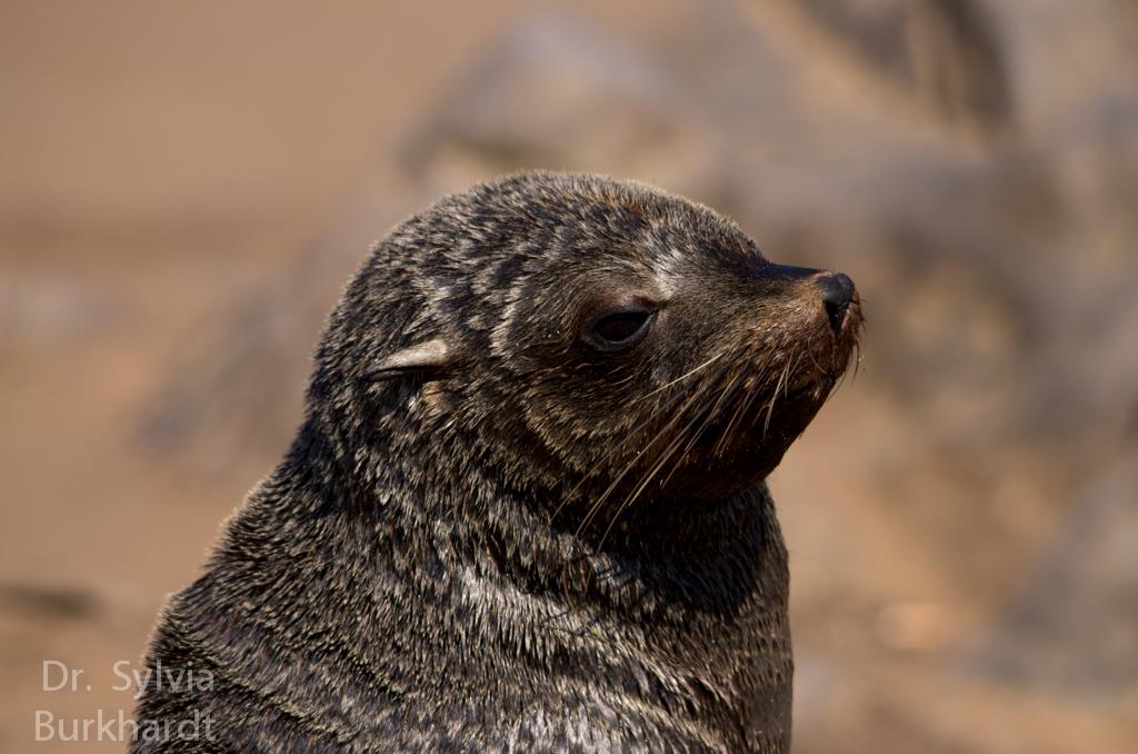 Seal Frisch vom Frisör