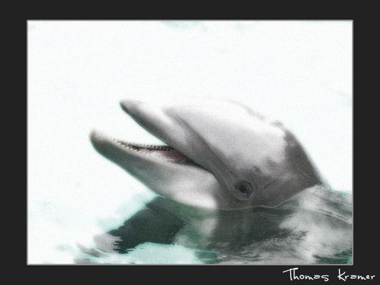 sealife...