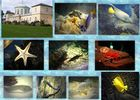 Sealife Collage Hannover