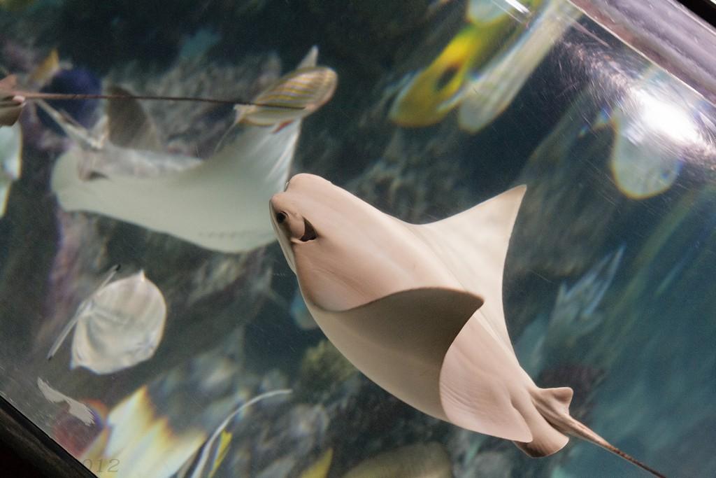 SeaLife Hannover