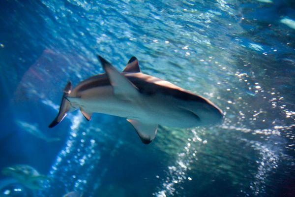 SeaLife Konstanz III