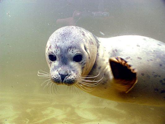 Sealife Seal