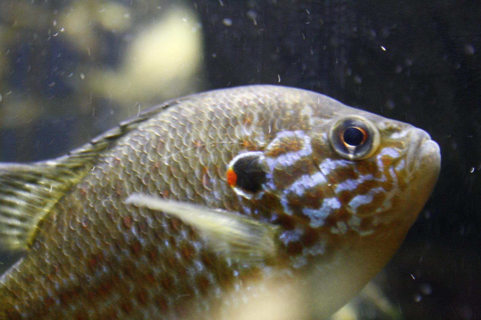 SeaLifeI