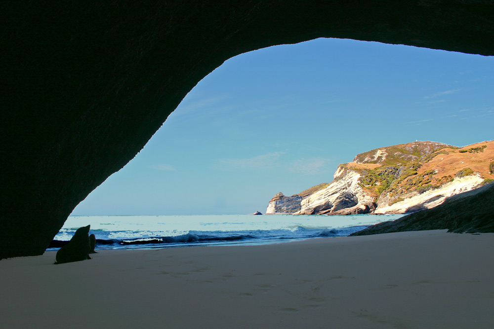 Sealion cave in New Zealand