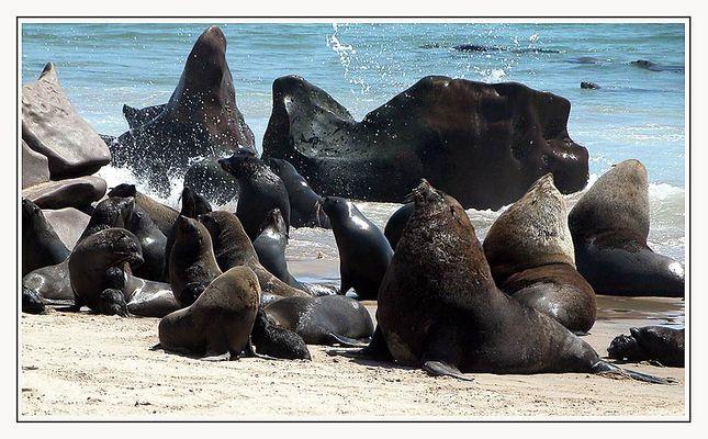 seals......rush hour