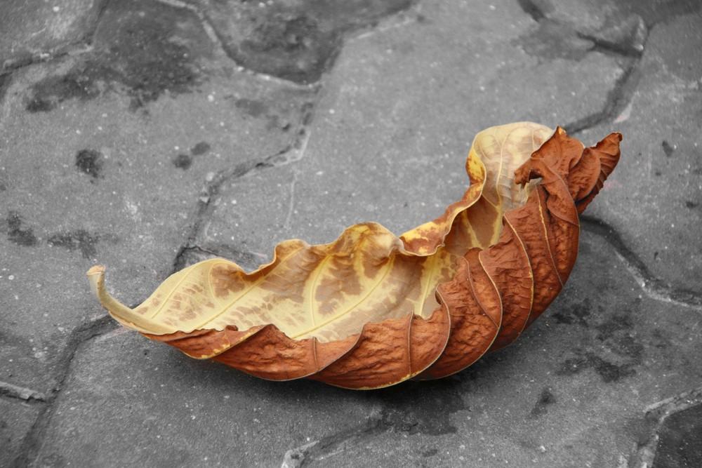 Sear leaf in Saigon