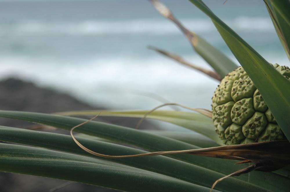 seaside plant